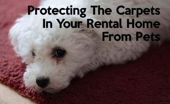 landlord tenant rent pets